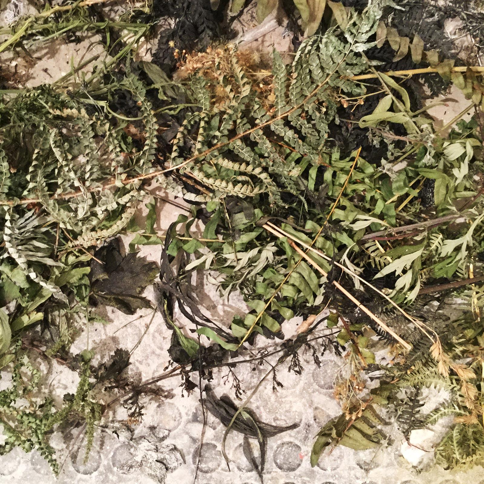 00–Caterina-Sbrana,-Le-erbe-selvatiche-raccolte